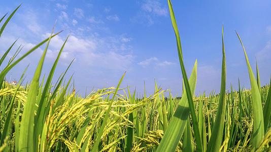 农业农村部办公厅 财政部办公厅关于做好2020年农业产业强镇建设工作的通知
