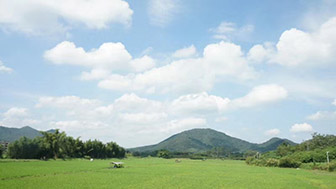 2020年1月份全国农业农村经济运行总体平稳