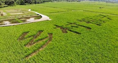 艾米稻香小镇入选广东省休闲农业与乡村旅游示范点!