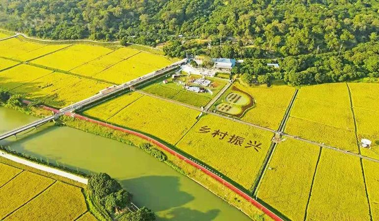 玩嗨啦!美图直击 ! 2020年金地商置艾米金色稻田音乐节成功举行