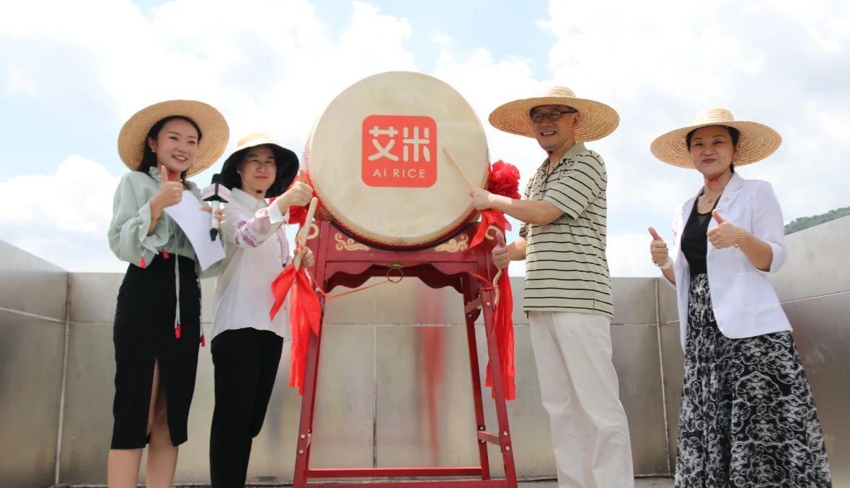 五羊献穗迎丰年 广州日报早稻丰收直播火热来袭